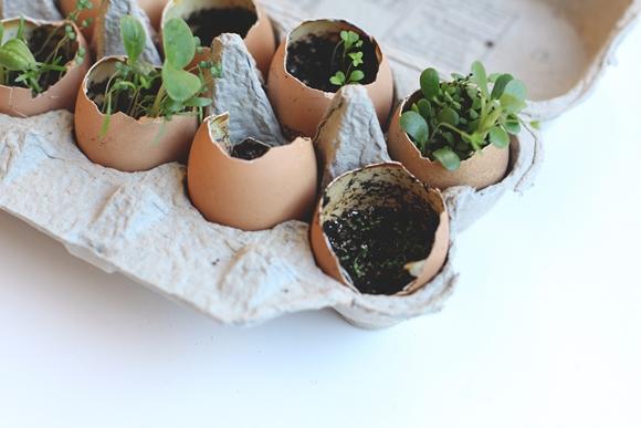 Un mini huerto en un cart n de huevo el que siembra - El huerto en casa ...