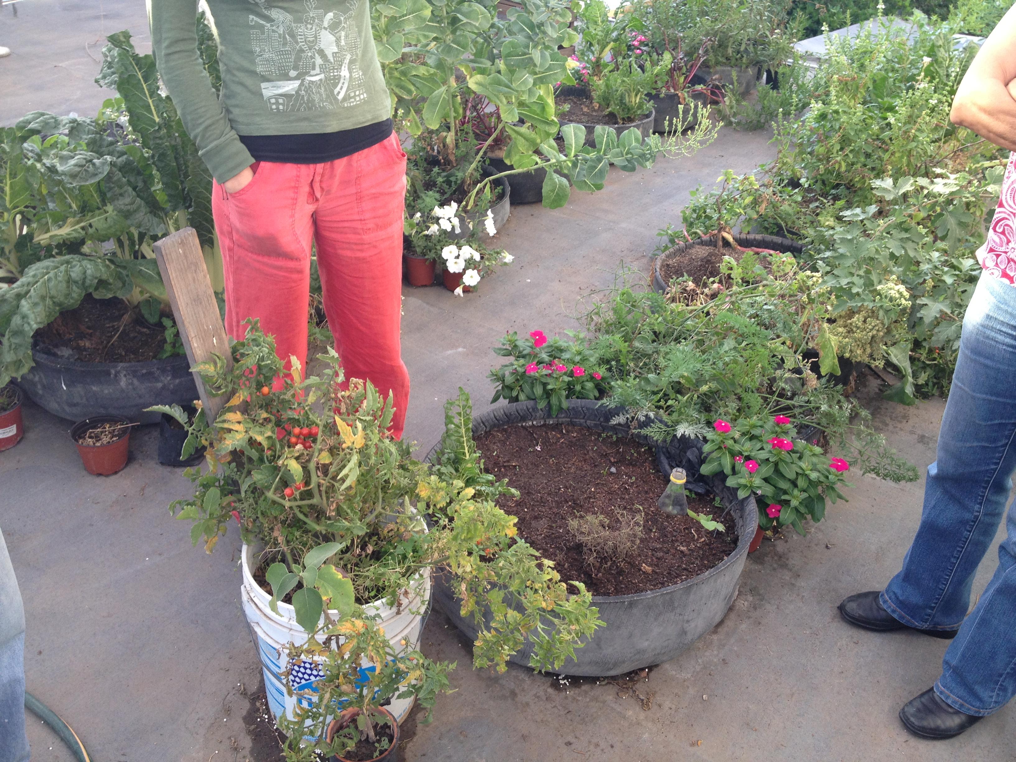 Taller de huertos urbanos el que siembra cosecha for Huerto en azotea