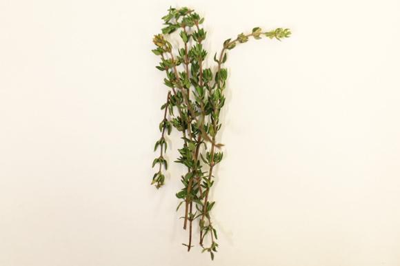 summer_herbs2