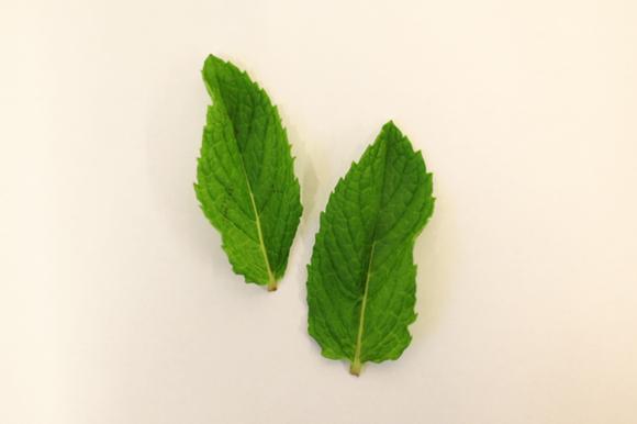 summer_herbs3