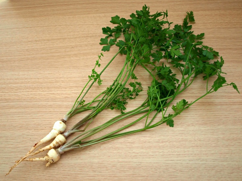 Hamburg Parsley11