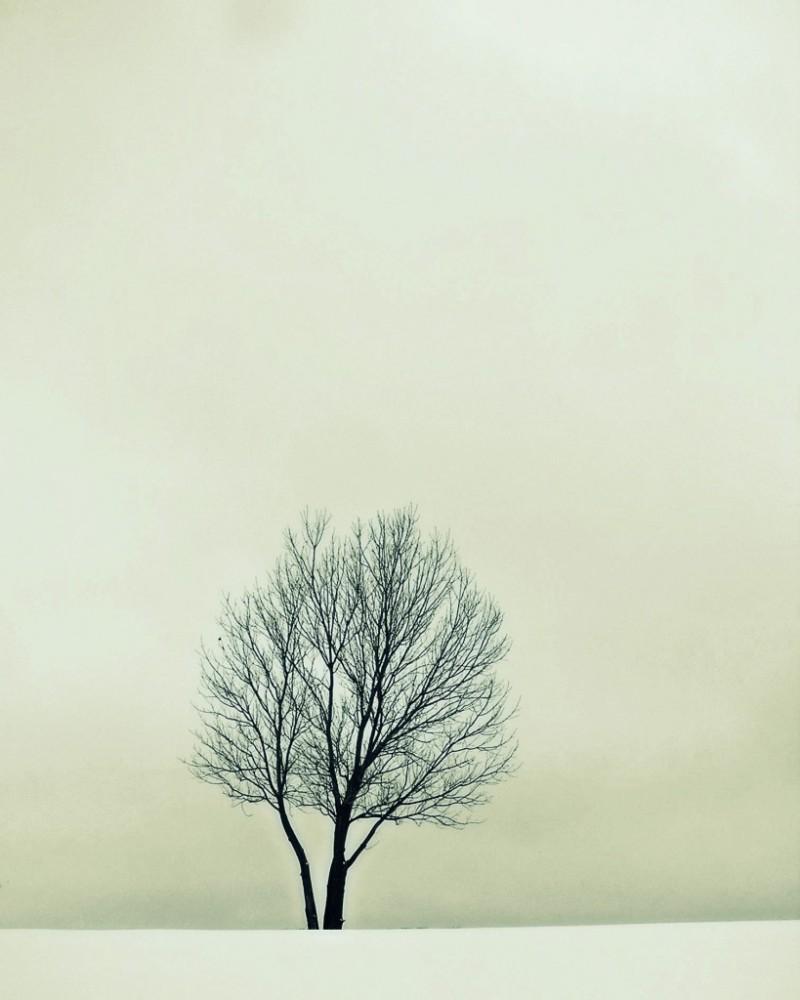 Jenni-One-Thing---Winter-Tree-706513