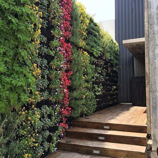 Jardines verticales el que siembra cosecha for Jardin vertical reciclado