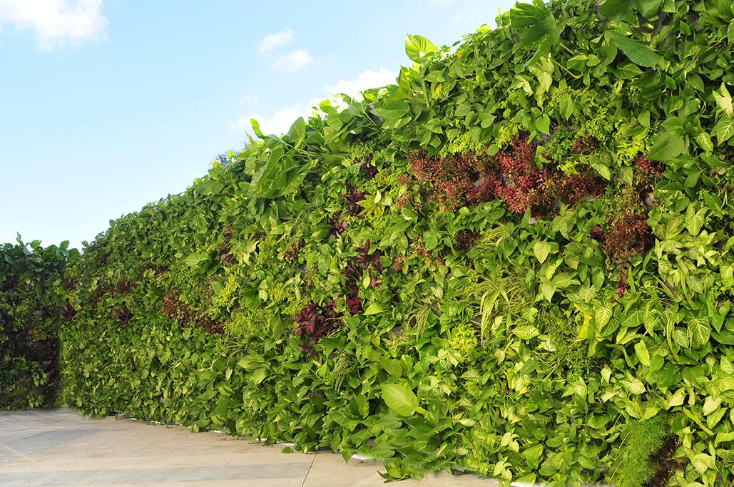 Monterrey el que siembra cosecha Jardines verticales baratos
